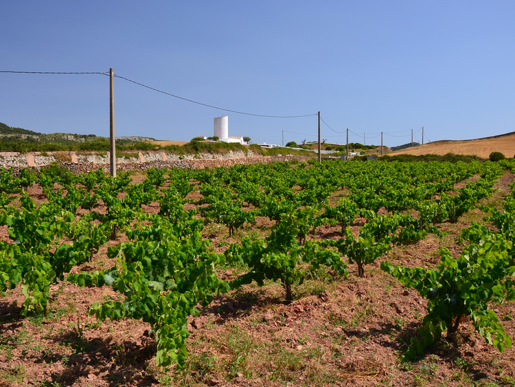 Food And Wine Tour Of Menorca And The Village Of Binibeca Costa